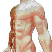 Postural Reconstruction® Physiotherapy